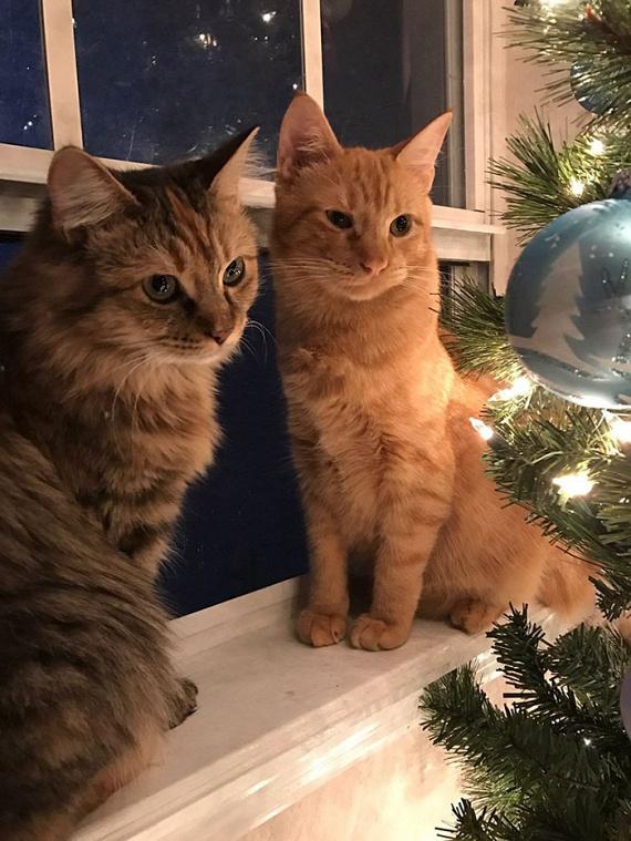 A két bársonytalpú karácsonyi képe bejárta az internetet, és sokan meghatódva reagáltak a cicák őszinte érzelmeire.