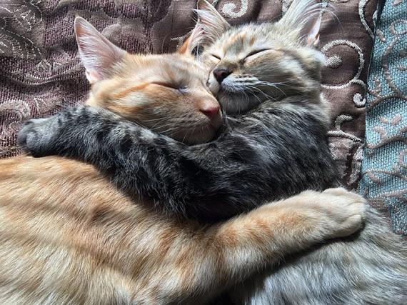 A macskák gazdája, James elmondta, őszintén örül neki, hogy sok embertől pozitív reakciókat hallott a cicák képei láttán.