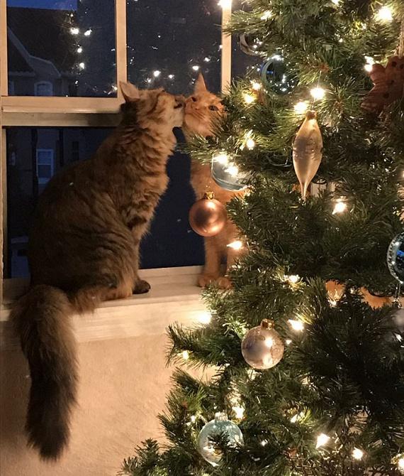 Luna és Louie azóta imádják egymást, amióta a házhoz kerültek, de karácsony közeledtével még az ő érzelmeik is felerősödtek.