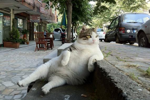 Ez az a fotó, ami számos vicces mémet ihletett, és ami a világ egyik leghíresebb macskájává tette Tombilit.