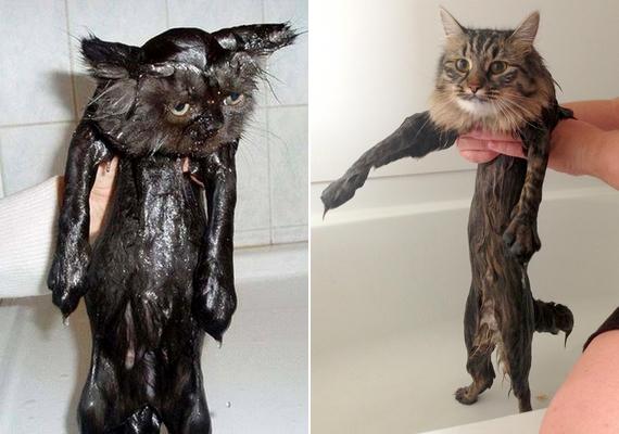 A vizes szőr alaposan kiadja az ember - macska - formáját.