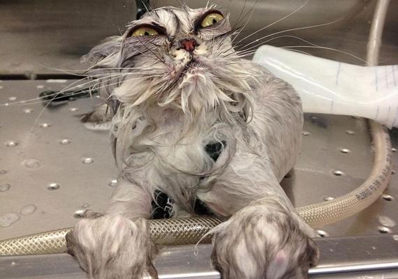 Így lesz a víz hatására cuki cicából bizarr szörnyecske pillanatok alatt.