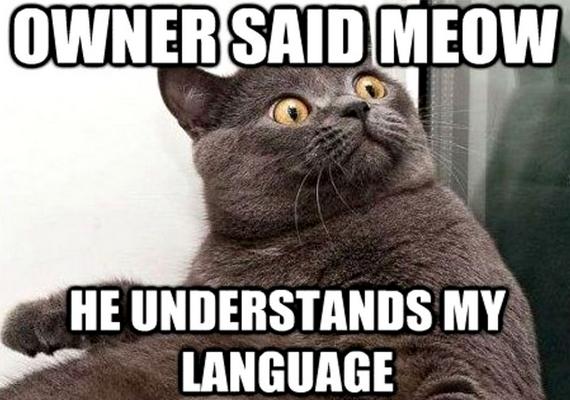 A gazdim azt mondta, miaú. Érti a nyelvemet!