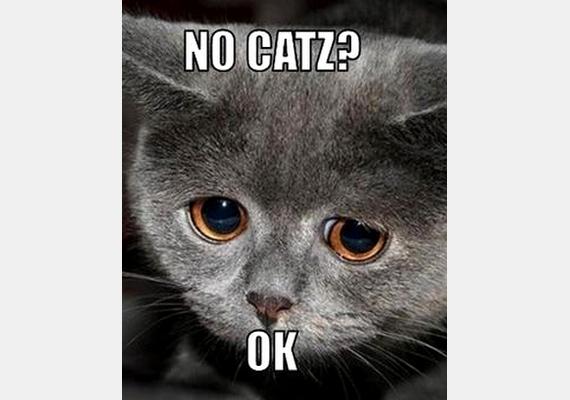 Macskáknak tilos? OK.