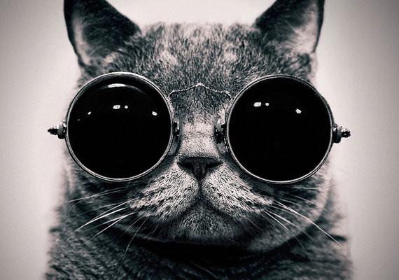 A fényvédelemről mindenképpen gondoskodj! A napszemüveges macska képét itt töltheted le.