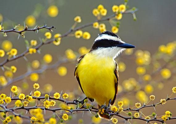 Nyáron az embernek kedve támad egy kis énekléshez. Engedd ki a hangod! A madárkás háttérképet itt találod.