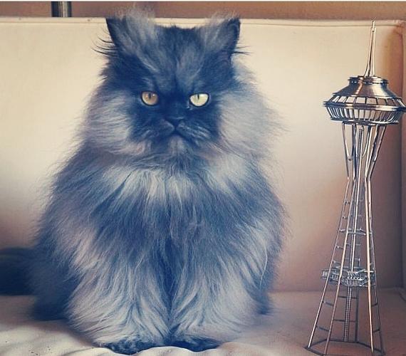 Colonel annyira szőrös macska, hogy ez már magában is vicces lenne, de mellé még egyénisége is van, ami egy egész Instagram-fióknyi fotót és videót eredményezett. Kattints ide értük!