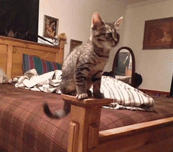 Ha szereted a gifeket és a macskákat, ez blog lesz a kedvenced, mert itt csak macskás gifek vannak, amik ráadásul még viccesek is. Nézd meg őket, kattints ide!