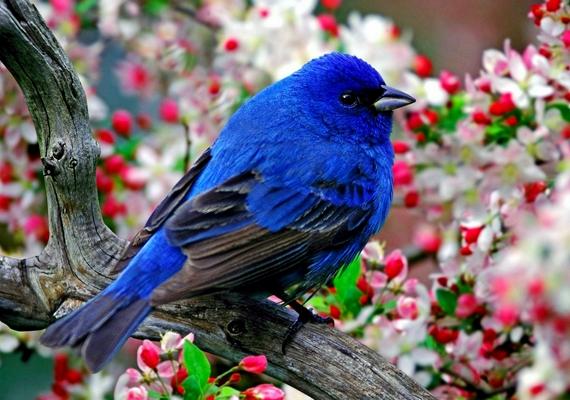 A boldogság kék madara. Kattints ide a nagyobb felbontású képért! »