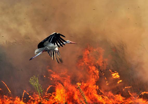 Az apokalipszis lovasai: a tavaly júliusi, Csóka település határában a szeméttelepről a nádasra és a pusztára átterjedt tűz odavonzotta a gólyákat. Ők ugyanis a szavannatüzek alkalmával megtapasztalták, hogy a tűz élelmet jelent - a megperzselt rovarok és apróbb állatok vonzották a madarakat a helyszínre.Gergely József sorozatával első helyezést ért el Természet és tudomány kategóriában.