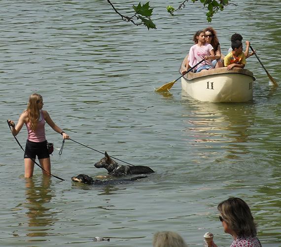A kutyákat még rosszabbul érinti a hőség, de a városligeti tóban szerencsére kedvükre fürödhetnek.