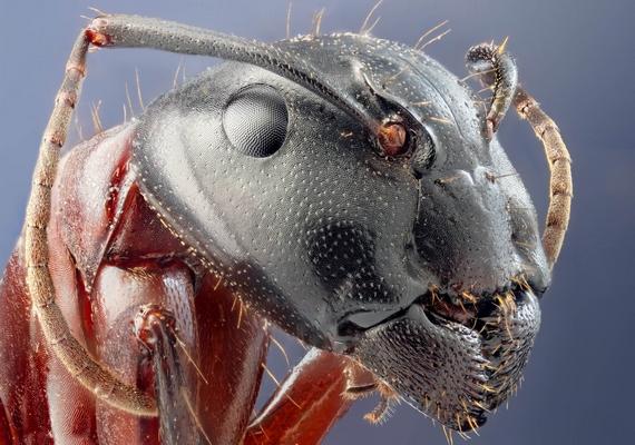 Még jó, hogy a padlón elszaladó hangyákat nem látod ilyen részletességgel.