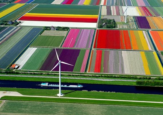 Számos kerékpáros turista látogat el a hollandiai Lissébe, ahol a tavaszi tulipánvirágzás idején színpompás kertekben gyönyörködhet az ember.