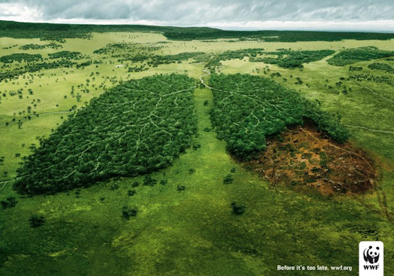Vegyél egy mély levegőt, mielőtt késő lenne. Sokan elszomorodnak egy ilyen kép láttán, de vajon hányan tudják, hogy miért írtják az esőerdőket?