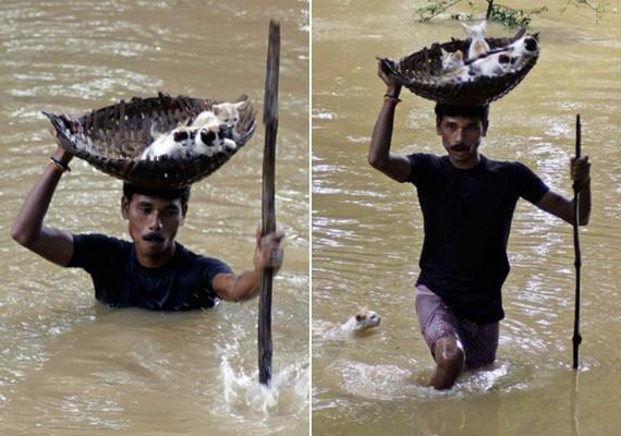Indiában, áradás után egy falubeli férfi bement a vízbe, hogy kimentsen egy macskacsaládot.