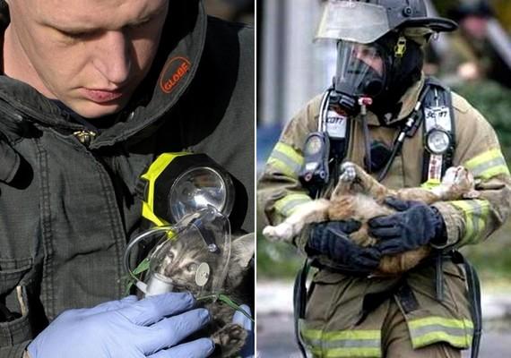 Tűzoltók megmentették az égő házban rekedt macskák életét.