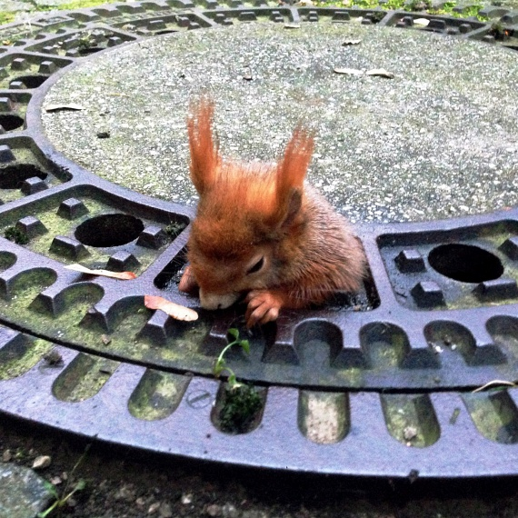 Tegnap adta közre ezt a fotót a Tierrettung München állatmentő szervezet a bajba jutott mókusról. Az állaton a szakértők szerint már a kezdődő hipotermia jelei mutatkoztak.
