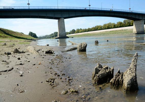 A Tisza Szolnoknál. A hőség és szárazság miatt augusztus elejére a vízállás rekordalacsony volt. Ezen a képen egy török kori fahíd maradványai kerültek szárazra, amik eddig azért maradtak fenn, mert a víz takarásában voltak évszázadokig.