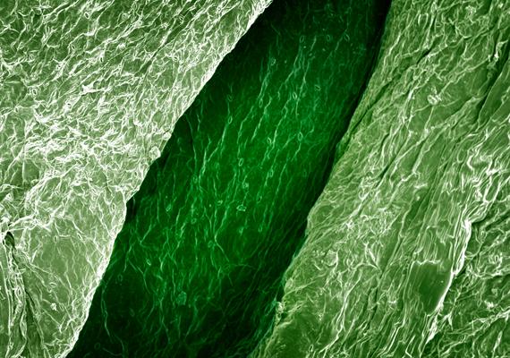 A zöld zellert fehér erek, rostok tarkítják.
