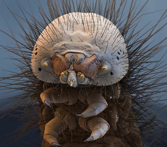 Gondolnád a kép alapján, hogy ez egy molyhernyó?