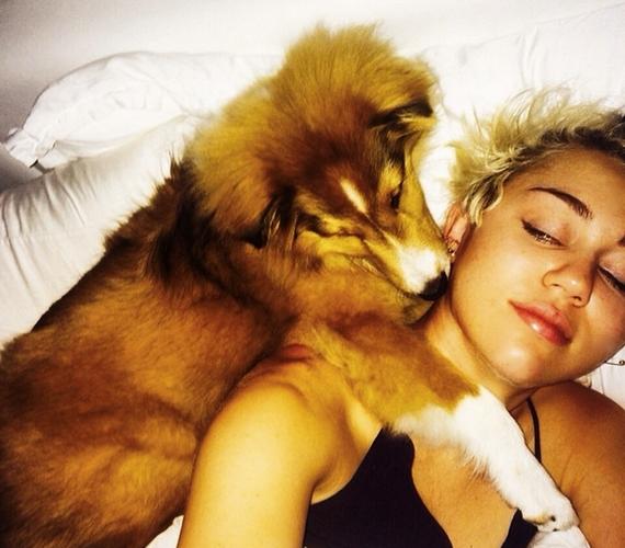 Miley a kutyusaival is különleges kapcsolatot ápol.