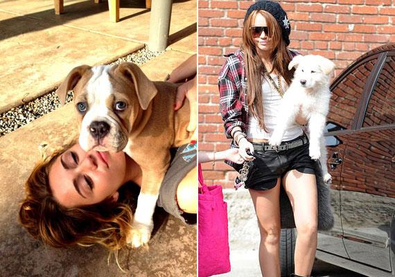 Miley a kutyák mellett lovat, nyulat és madarakat is tart.
