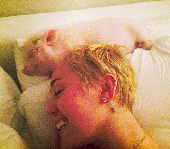Miley odavan a jószágért, még az ágyát is megosztja vele.