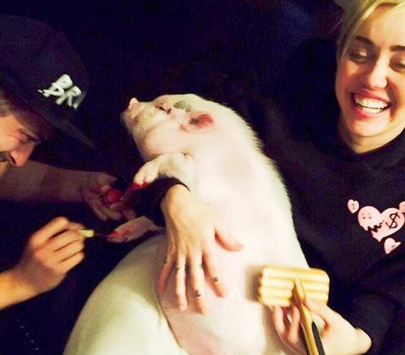 Annyi biztos, hogy az énekesnő nagyon szereti, és nem mindennapi bánásmódban részesíti az állatkát.