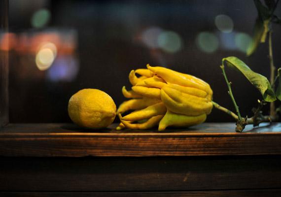 A Buddha keze egy, a citrusfélék családjába tartozó, teljesen átlagos fácska, gyümölcsét elnézve azonban megértheted, honnan kapta a nevét.