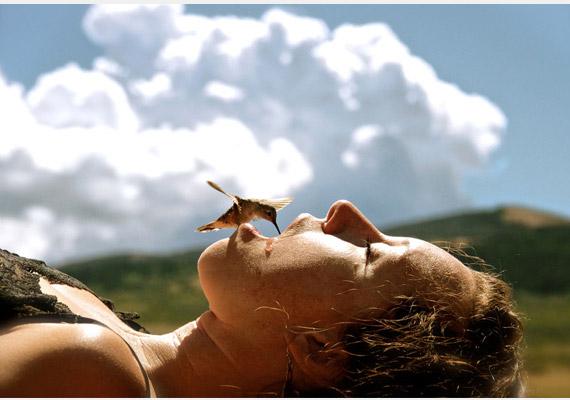 Ha a kolibri igazán szomjas, még az ember szájából is iszik. A képet készítette: Sundell Larsen.
