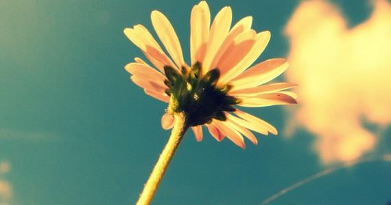 Nyári virágszál.Kattints ide a nagyobb felbontású képért! »