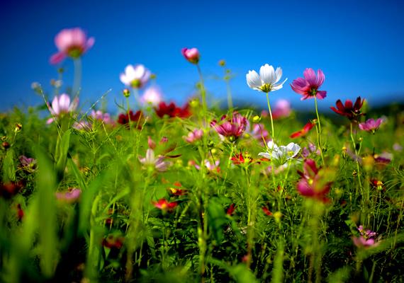 Csodaszép virágok.Kattints ide a nagy felbontású képért! »