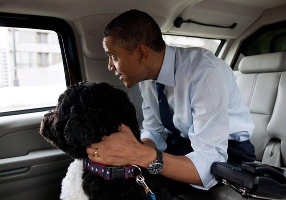 Az Obama család életének szerves része lett kutyájuk, Bo.