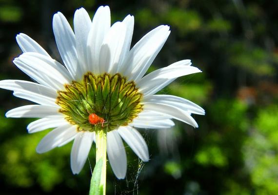 A virág közepében vagy az alján mászik a pók?