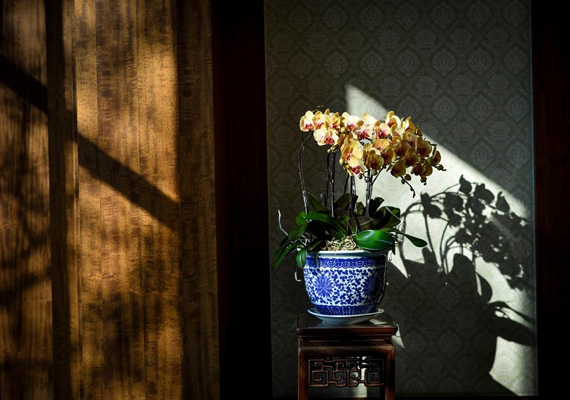 Kínai virág kínai cserépben.