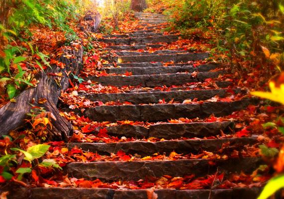 Vörös szőnyeg levelekből. Itt töltheted le a háttérképet! »