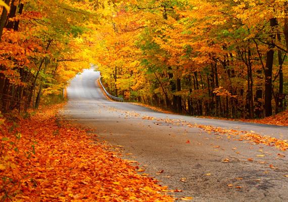 Vajon hová vezet a sárga faleveles út? Itt töltheted le a háttérképet! »