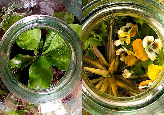 A palackba zárt önfenntartó kertnek nagy divatja van, de a levegőt elvileg nem szabad elzárni a növények elől.