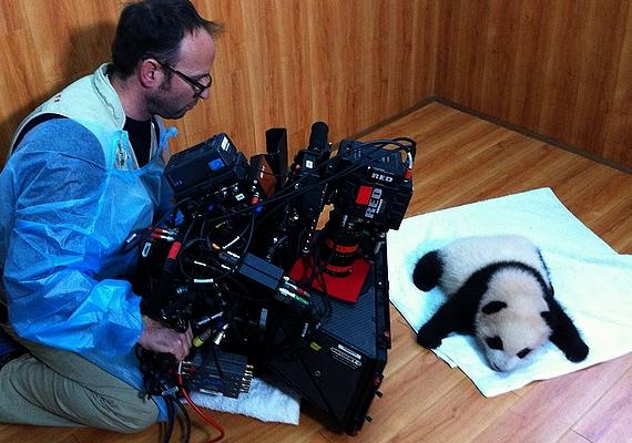 A NatGeo Wild Óriáspandák című filmje bepillant a kulisszák mögé, és lenyűgöző képsorokon mutatja be a pandák életét a központban, a fogantatástól kezdve egészen a természetbe való visszaszoktatásig.Az Óriáspandák című film szeptember 13-án 20 órakor látható a NatGeo Wild műsorán.