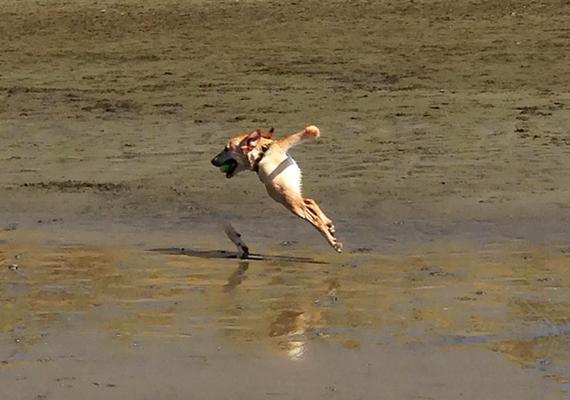 Ha eddig azt gondoltad, csak a madarak tudnak repülni, most megbizonyosodhatsz róla, hogy bizonyos kutyáknak is van ilyen képességük. Csak jól titkolják.