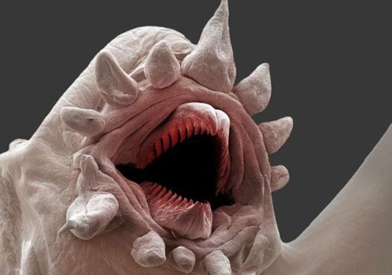 A tenger alatti vulkánok közelében, különösen magas hőmérsékleten is életben maradnak.