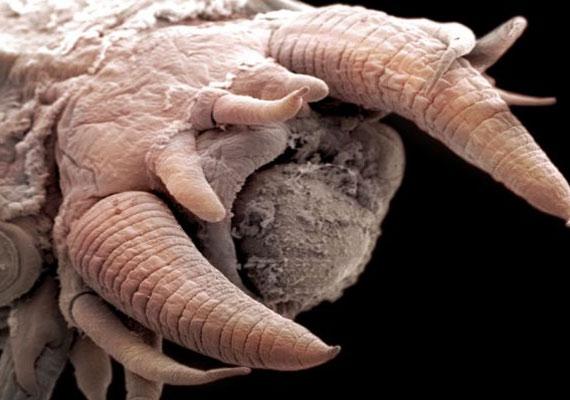A mélyben élő lények kutatása az idegen élet keresését is elősegítheti.