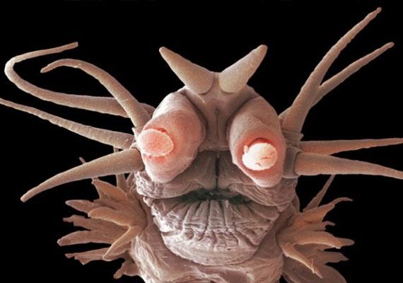A tenger mélyén élő lényeknek még mindig csak nagyon kis százalékát ismerjük.