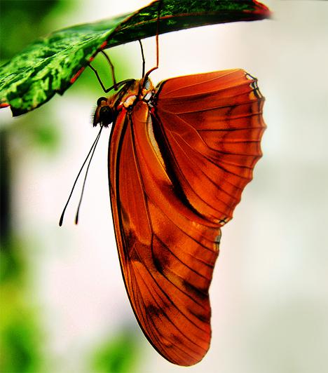 A pillangóhatás vagy -effektus, ami egy 2004-ben készült hollywoodi film címe is, azon az elméleten alapszik, amely megalapozta a káoszelméletet. E szerint az olyan apró dolgok, mint például egy pillangó szárnycsapása, megváltoztathatnak olyan nagy dolgokat, mint például az időjárás.