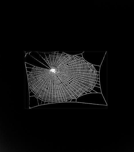 Drogmentesen                         A pókok, mielőtt kábítószer hatása alá kerültek, a hagyományos légyfogó formát szőtték. A hosszanti szálakat keresztszálak kötötték össze, kihagyások nem voltak.