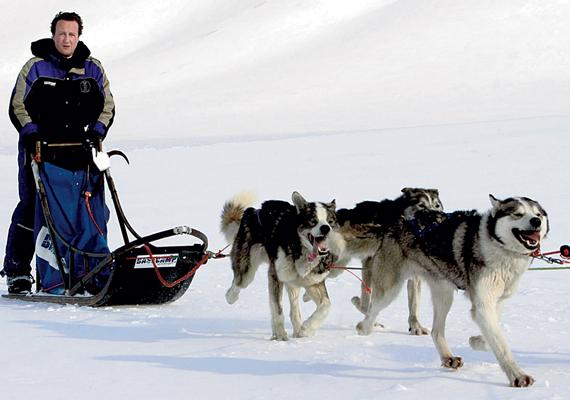David Cameronnak volt már alkalma kipróbálni a szánhúzást. A képből ítélve egész jól ment neki annak ellenére, hogy a kutyákat irányítani korántsem olyan könnyű, mint amilyennek látszik. A kép még 2006-ban készült, amikor Cameron Norvégiában gleccsereken győződhetett meg az éghajlatváltozás hatásairól.
