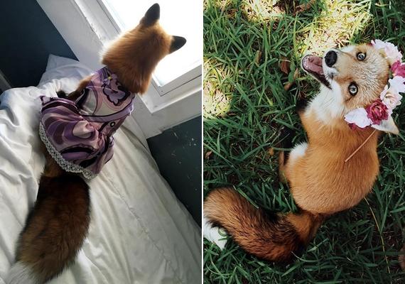 Juniper egy nőstény róka, ezt Jessica olykor ruhákkal és kiegészítőkkel hangsúlyozza.