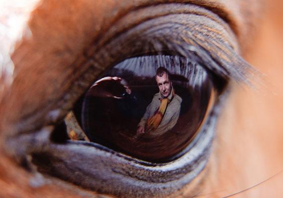 Komka Péter - MTI, külső munkatárs - Szemben című felvétele az Emberábrázolás - Portré - egyedi - kategóriában első lett.
