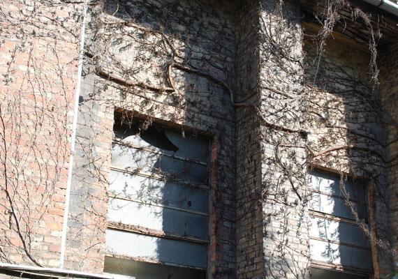 Törött ablak a kórház udvarán álló egyik épület falán. A futónövény sem zöldell már.