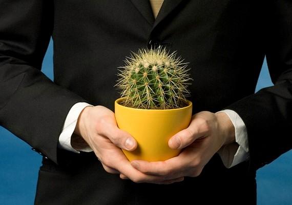 A kaktusz az egyik legismertebb szereleműző tárgy. Ha a szobádban több kaktusz is van, tüskéi miatt nemcsak a nagy Ő kerül el, de másoktól is eltávolodhatsz.